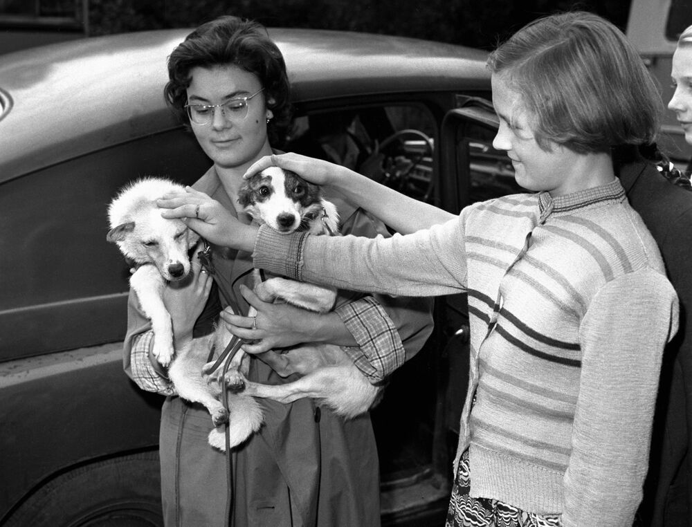 Una ragazza coccola i cani cosmonauti sovietici Belka e Strelka, 1960.