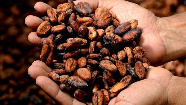Cacao - Sputnik Italia