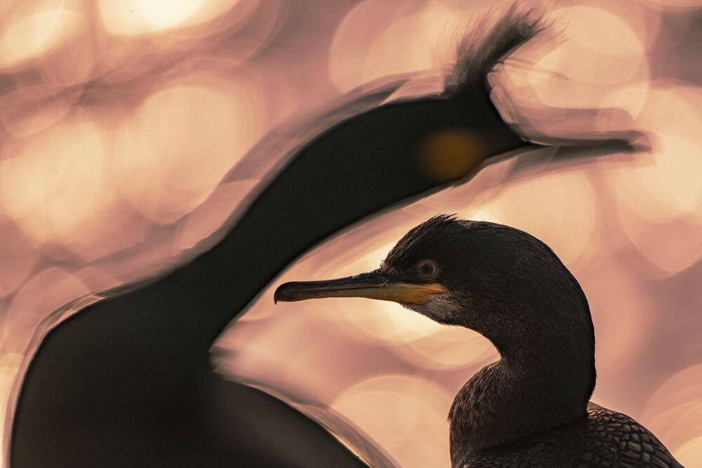 La foto End of the Day (La fine del giorno) del fotografo Majed AlZa'abi (Kuweit), nominato vincitore del concorso  Bird Photographer of the Year 2020.