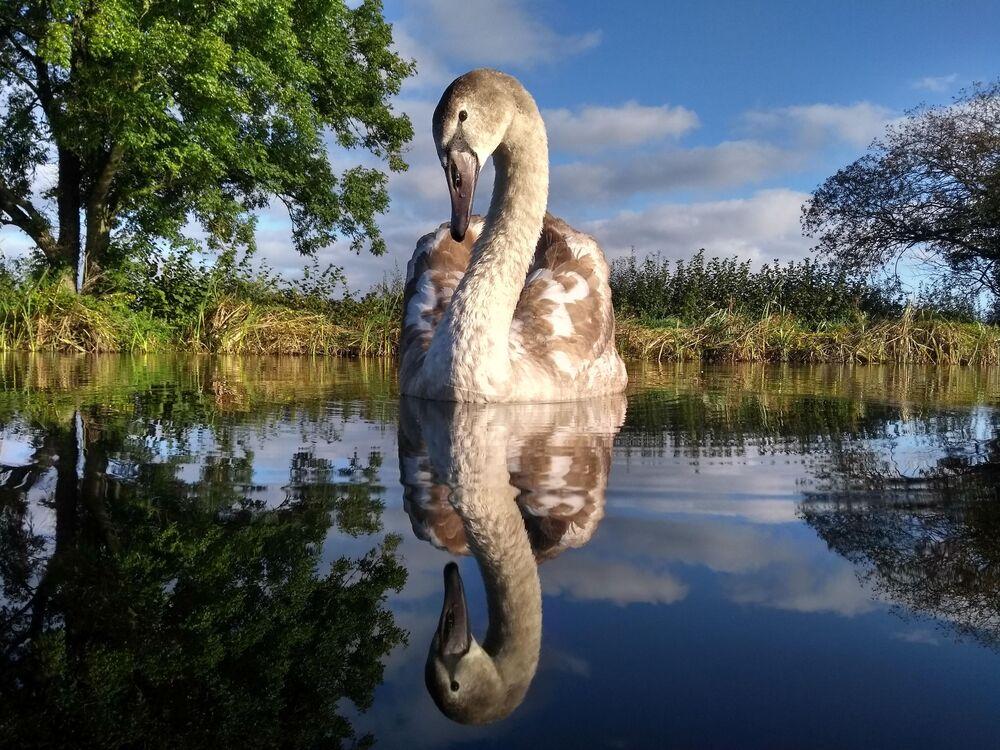 La foto Riflesso doppio di Adam Lake (Gran Bretagna), vincitore tra i giovani di 14-17 anni.