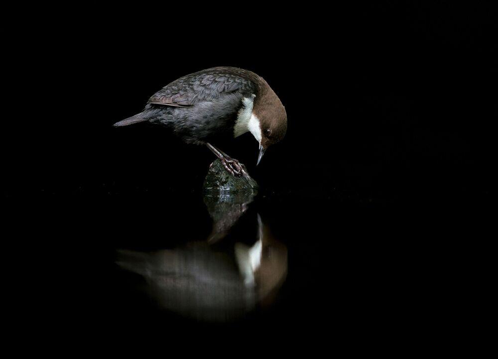 Foto Merlo acquaiolo allo specchio del fotografo norvegese Terje Kolaas, classificato terzo nella categoria Miglior ritratto.