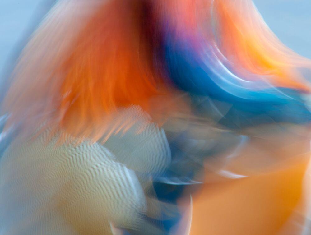 Foto Mandarino astratto del fotografo britannico James Hudson, vincitore della categoria Immaginario creativo.