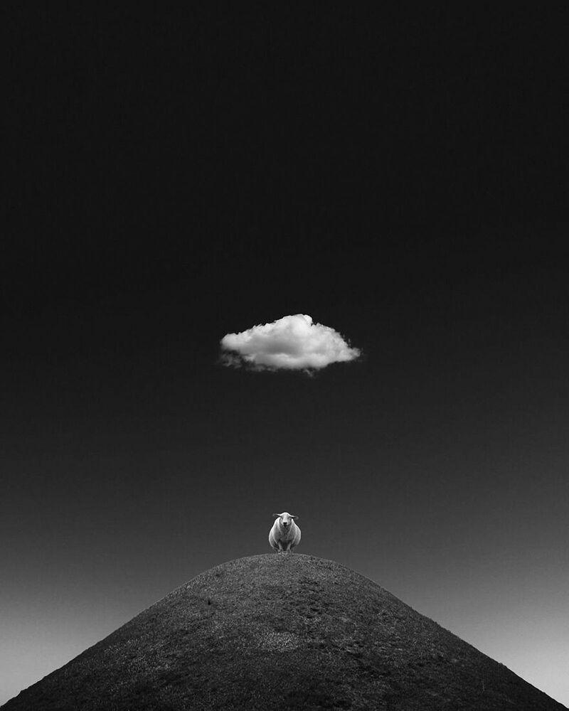 Lo scatto La pecora illuminata di Kathrin Federer, Minimalist Photographer 2020