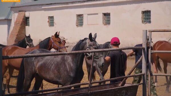 l cavalli trottatori Orlov - Sputnik Italia