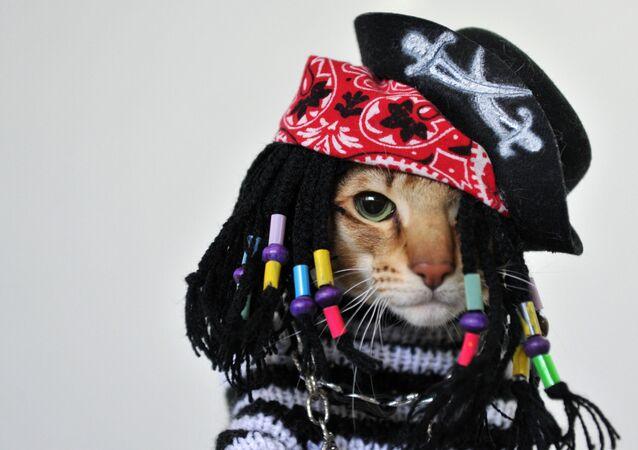 Un gatto vestito da pirata durante una mostra di gatti a Bishkek, il 20 ottobre 2013