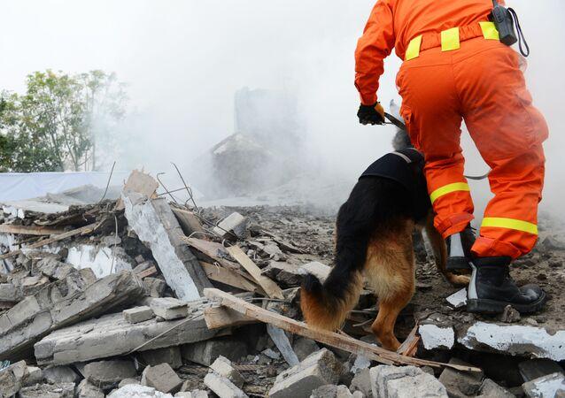 Un cane soccorritore