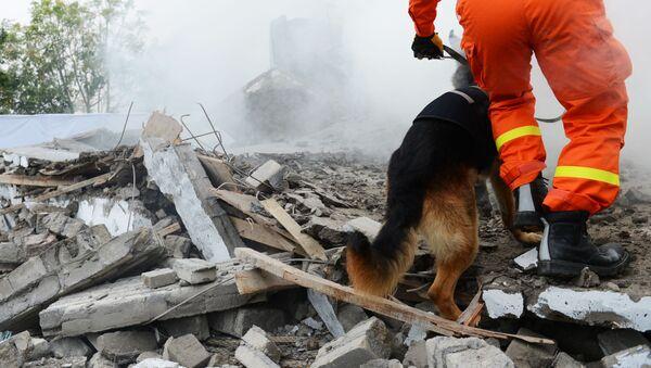 Un cane soccorritore - Sputnik Italia