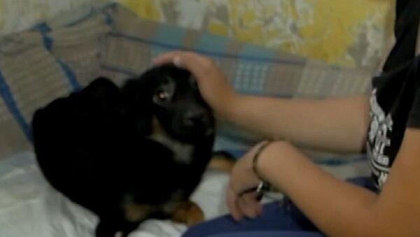 Cucciolo salvato a Prokop'evsk - Sputnik Italia