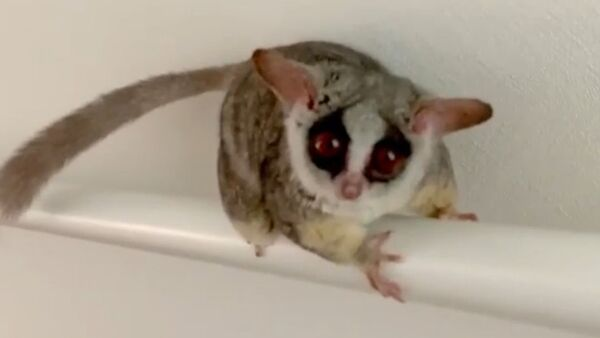 Lemure - Sputnik Italia