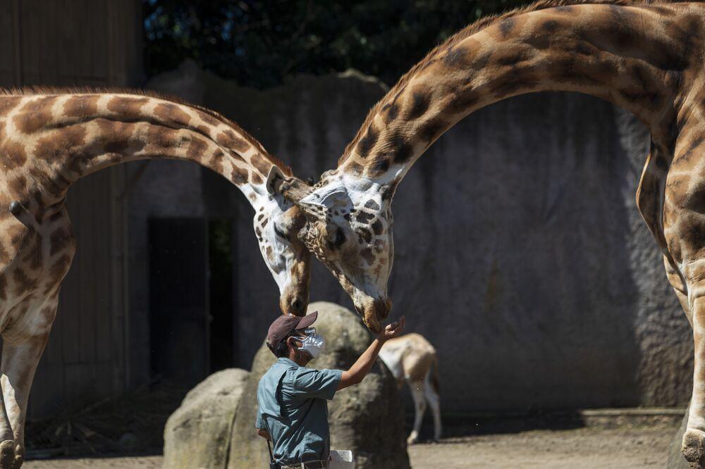 Visitatori danno da mangiare alle Giraffe allo zoo di La Aurora in Guatemala.