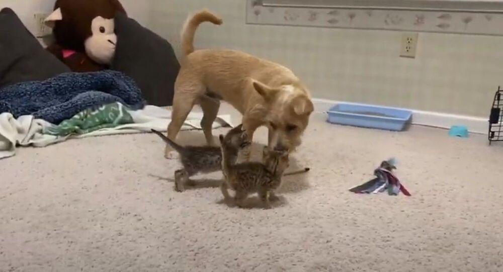 Il cane che ha paura dei piccoli gatti