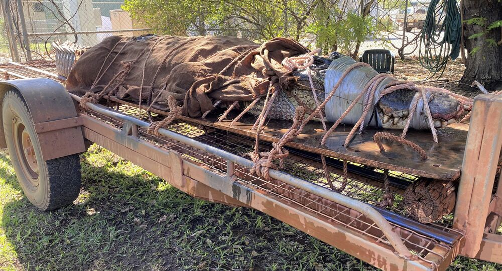 Cocccodrillo gigante catturato in Australia