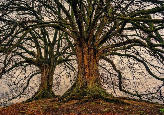 Grandi e vecchi alberi