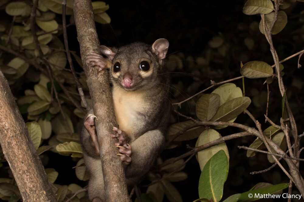 La foto del fotografo Matthew Clancy, Australian Geographic Nature Photographer 2020