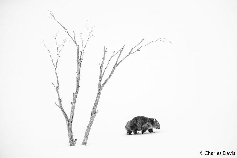 La foto del fotografo Charles Davis, Australian Geographic Nature Photographer 2020