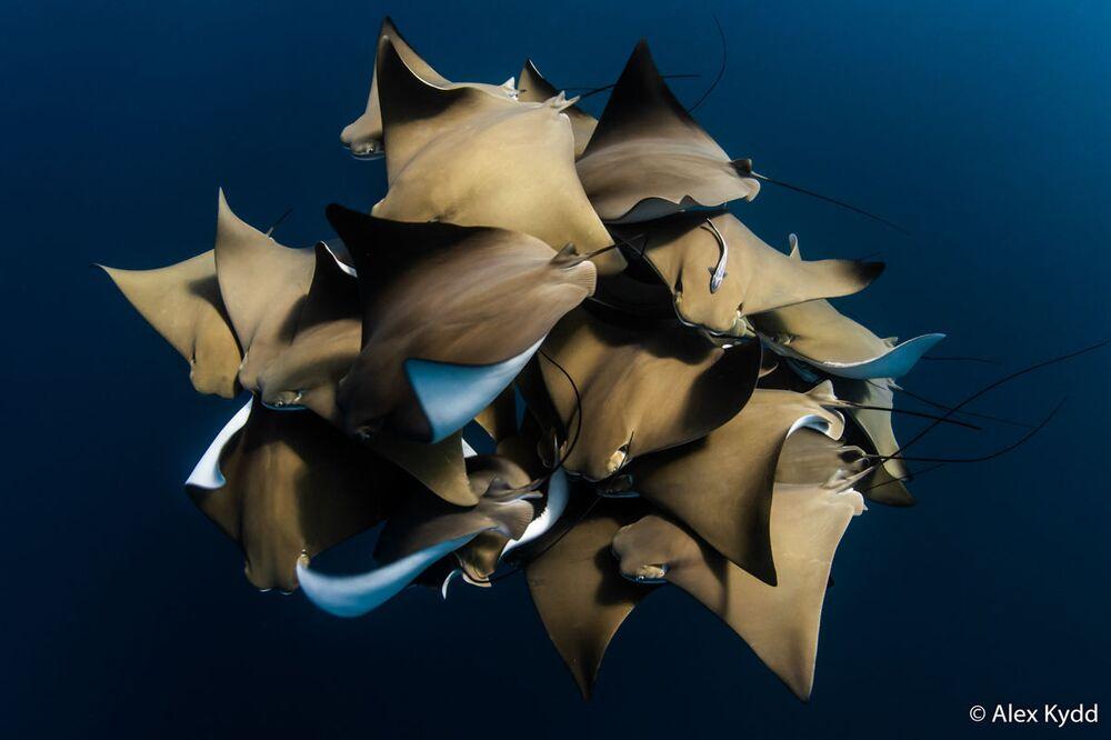 La foto del fotografo Alex Kydd, Australian Geographic Nature Photographer 2020