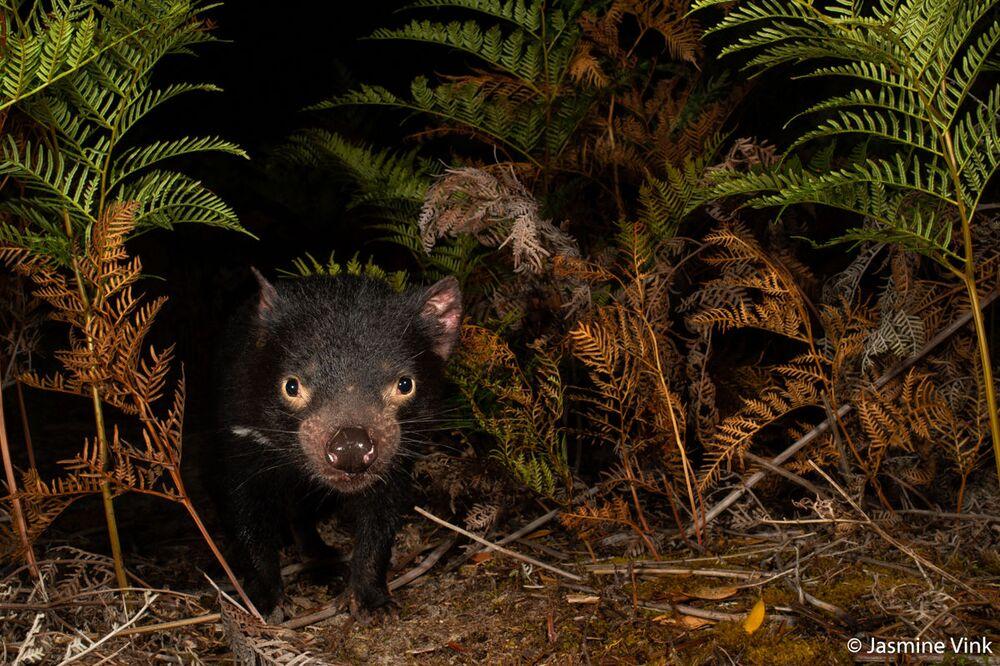 La foto della fotografa Jasmine Vink, Australian Geographic Nature Photographer 2020