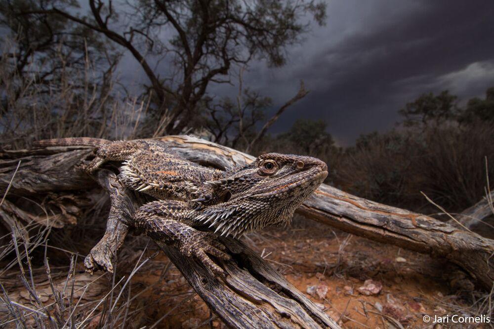 La foto del fotografo Jari Cornelis, Australian Geographic Nature Photographer 2020