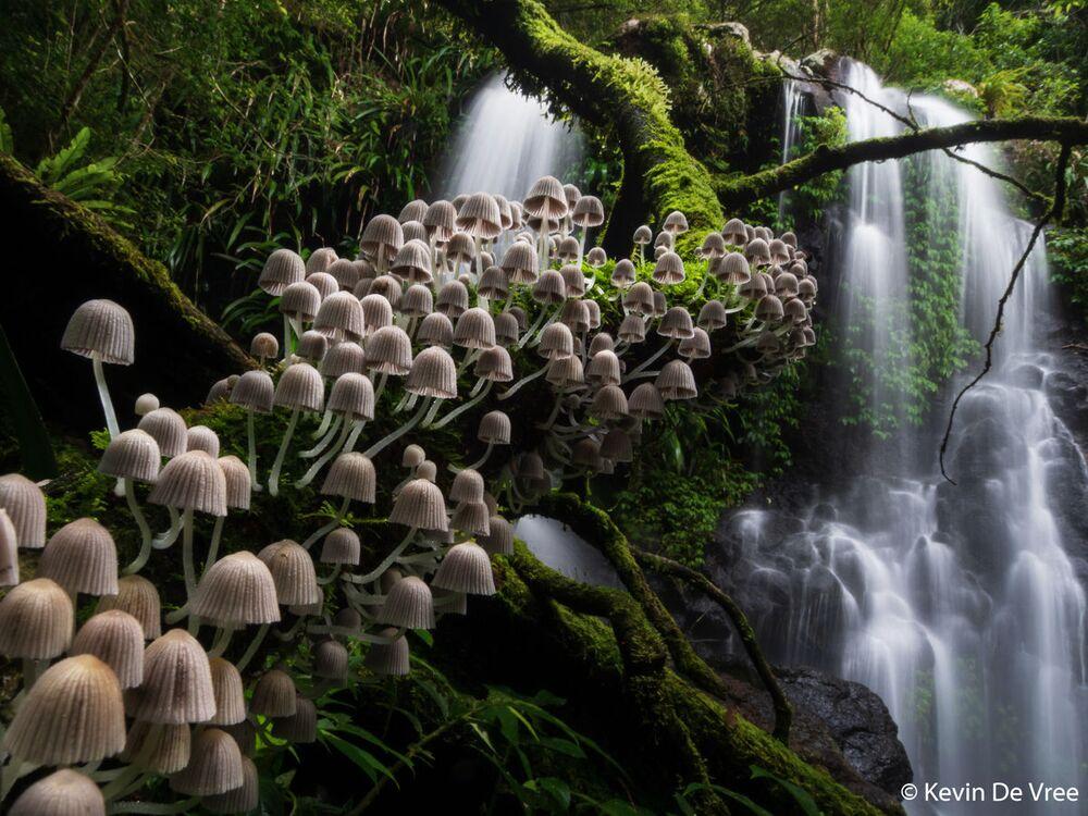 La foto del fotografo Kevin De Vree, Australian Geographic Nature Photographer 2020