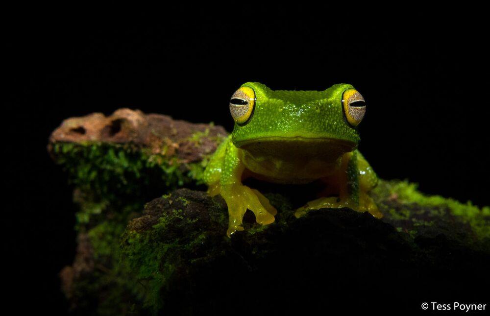 La foto della fotografa Tess Poyner, Australian Geographic Nature Photographer 2020