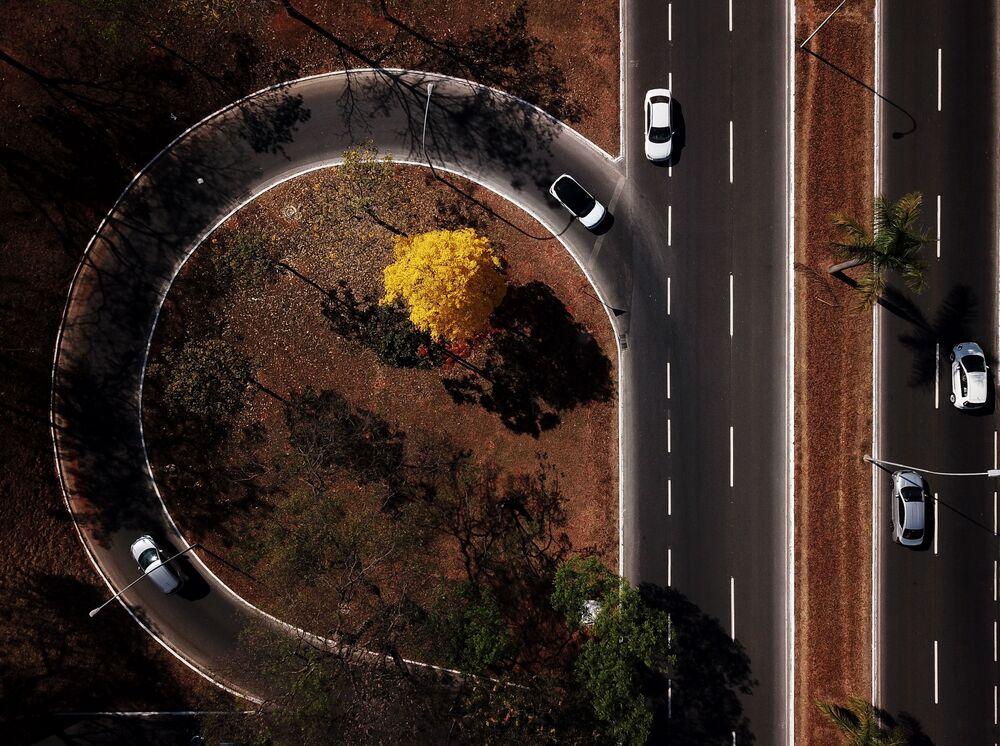 Vista aerea di ipe giallo (Handroanthus serratifolius) nella regione centrale di Brasilia, il 1° settembre 2020