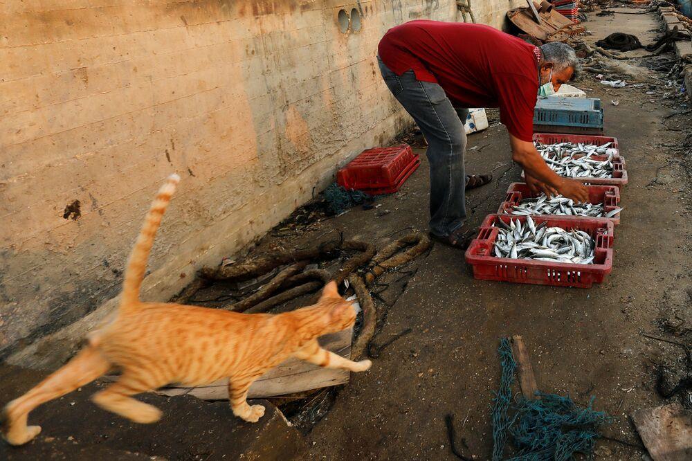 Un pescatore con un gatto nel porto di Gaza, il 3 settembre