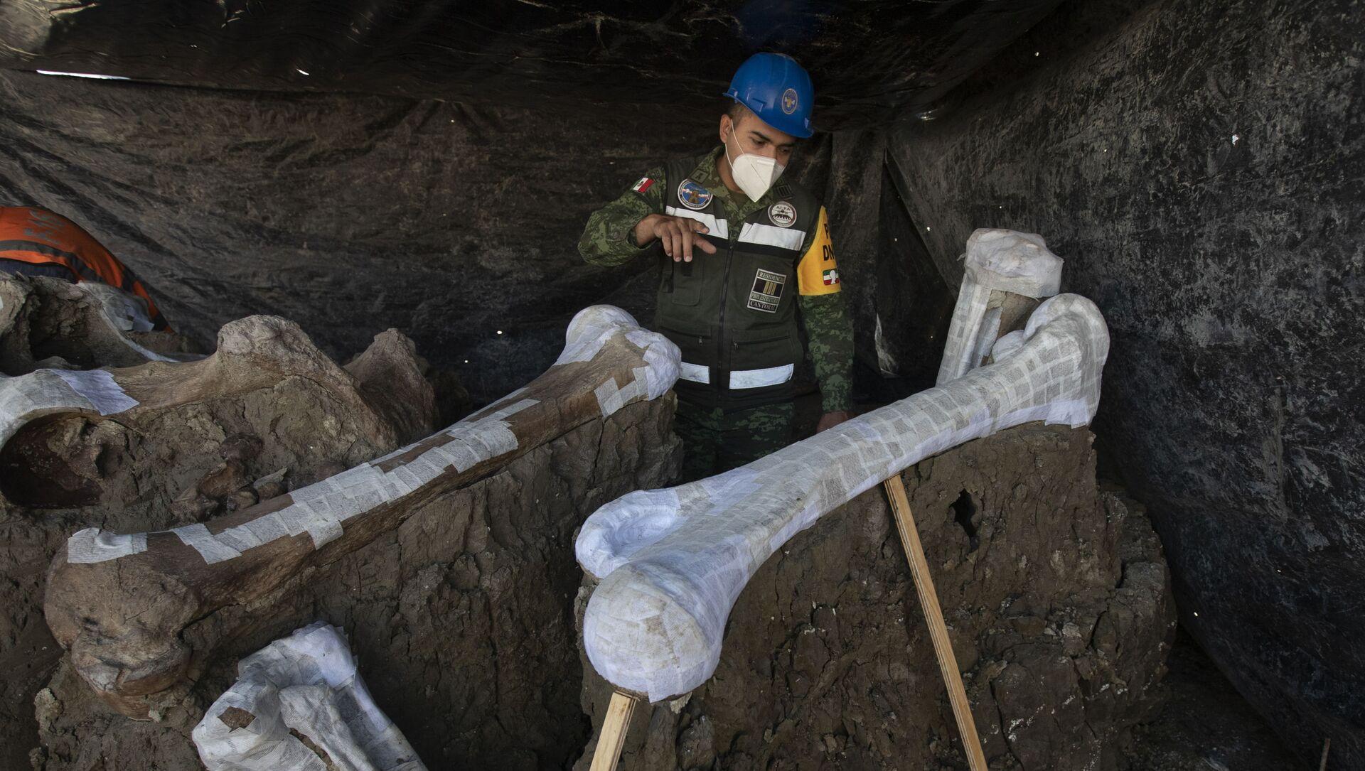 I resti di mammut trovati nel sito in cui è in costruzione il nuovo aeroporto internazionale di Città del Messico - Sputnik Italia, 1920, 06.02.2021