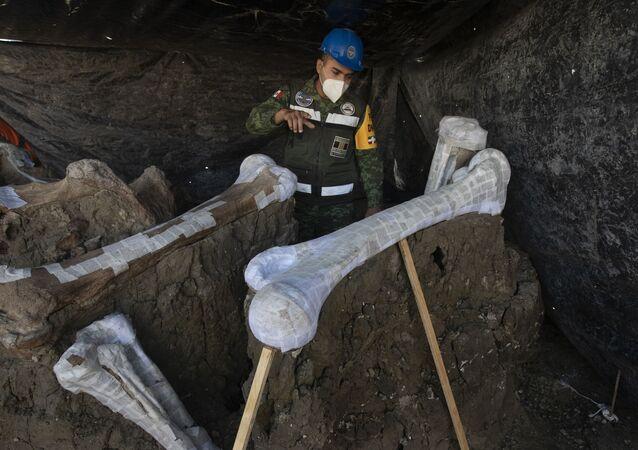 I resti dei mammut rinvenuti a Città del Messico