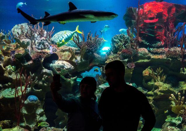 Uno squalo in un acquario
