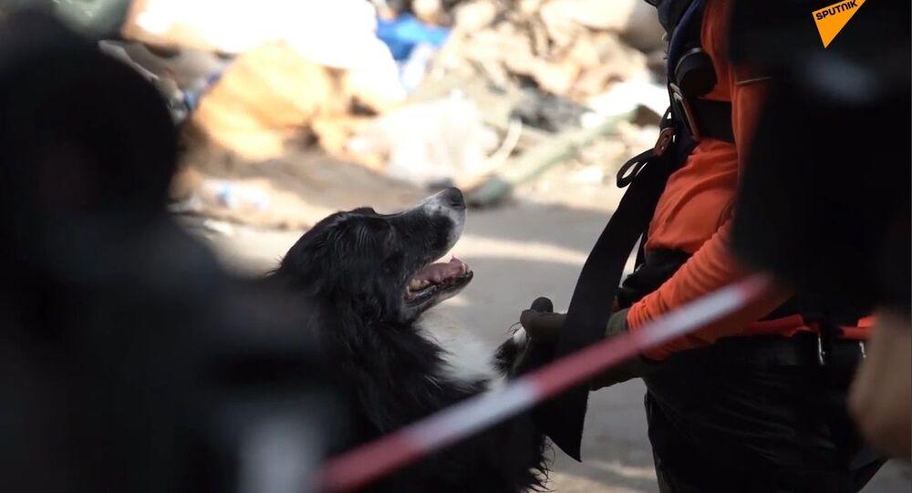 Esplosione a Beirut, i cani soccorritori dalla Russia trovano le vittime