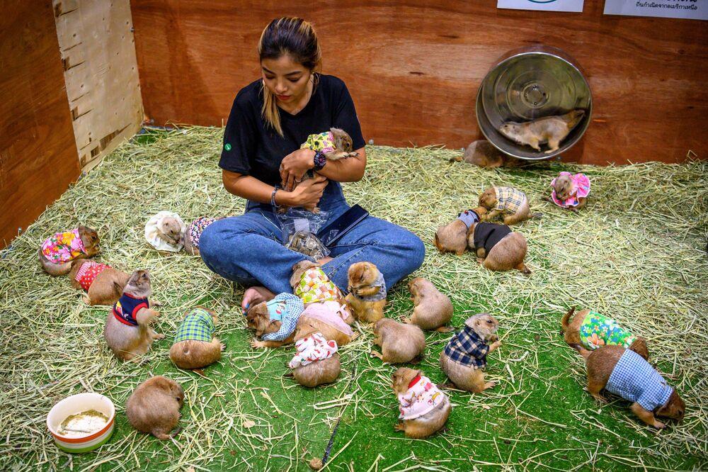 Una donna gioca con i cani della prateria durante il Pet Expo Thailand 2020 a Bangkok, il 5 settembre 2020.