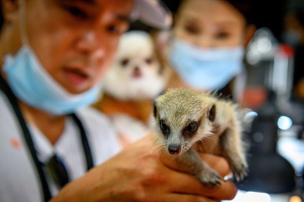 Un visitatore tiene un suricato al Pet Expo Thailand 2020 a Bangkok il 5 settembre 2020.