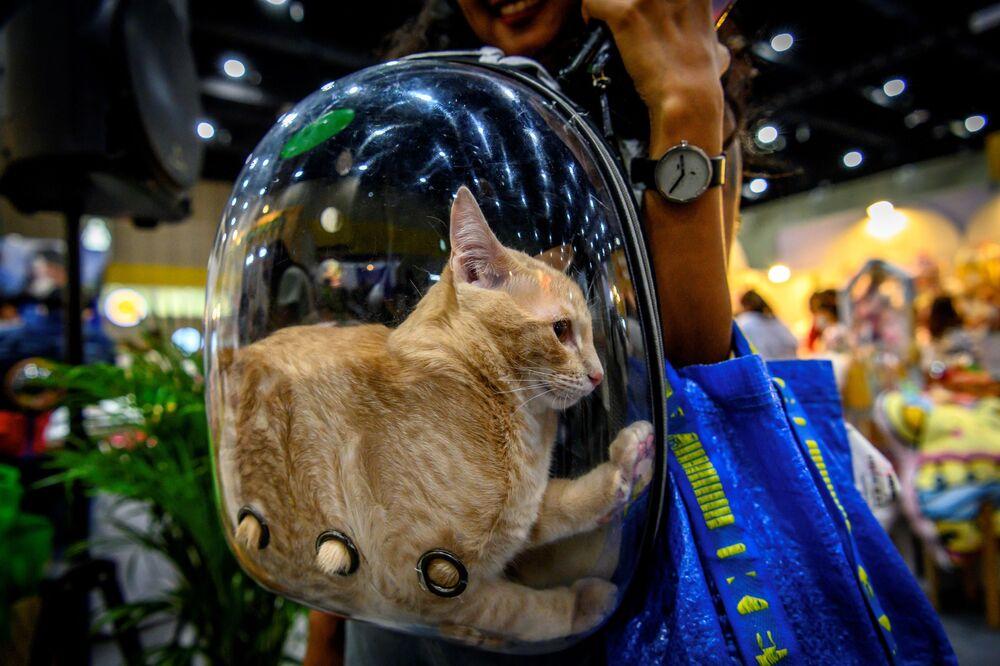 Un visitatore trasporta il suo gatto in uno zaino di plastica trasparente al Pet Expo Thailand 2020 a Bangkok il 5 settembre 2020.