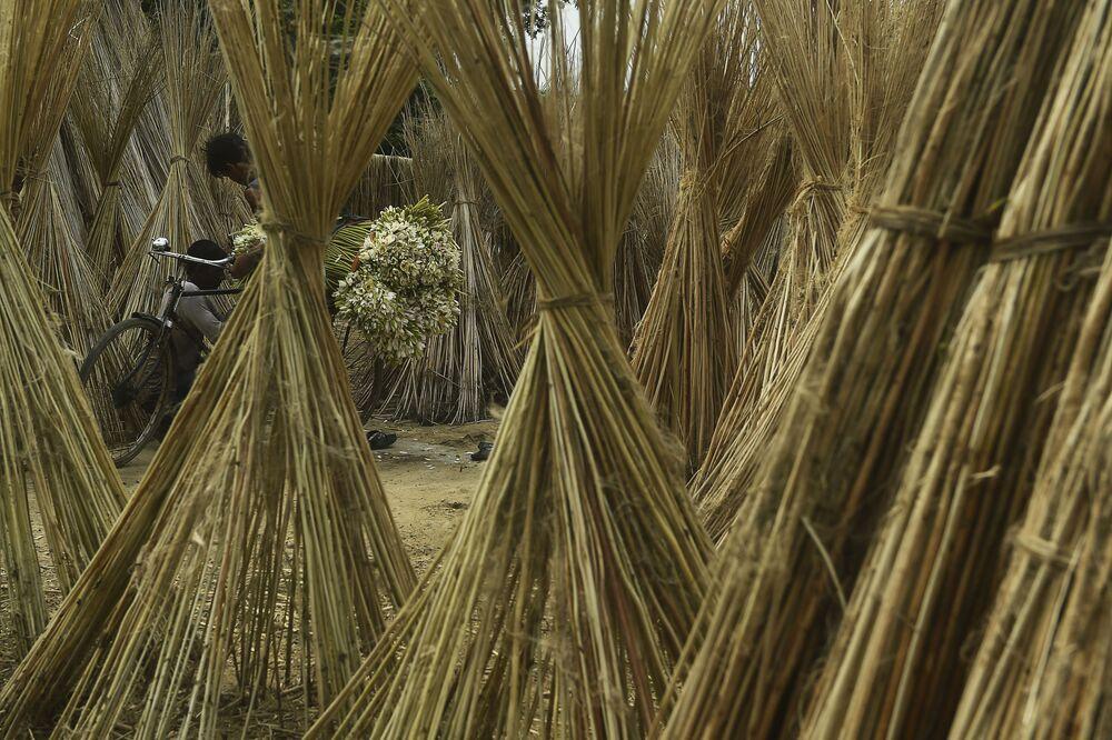 Un contadino nei pressi di Calcutta, in India.