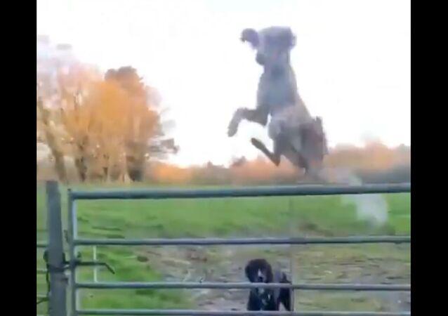 Un cane...elicottero!