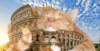 Il Colosseo con Zarathustra il Gatto nel progetto di Svetlana Petrova Fat Cat Art