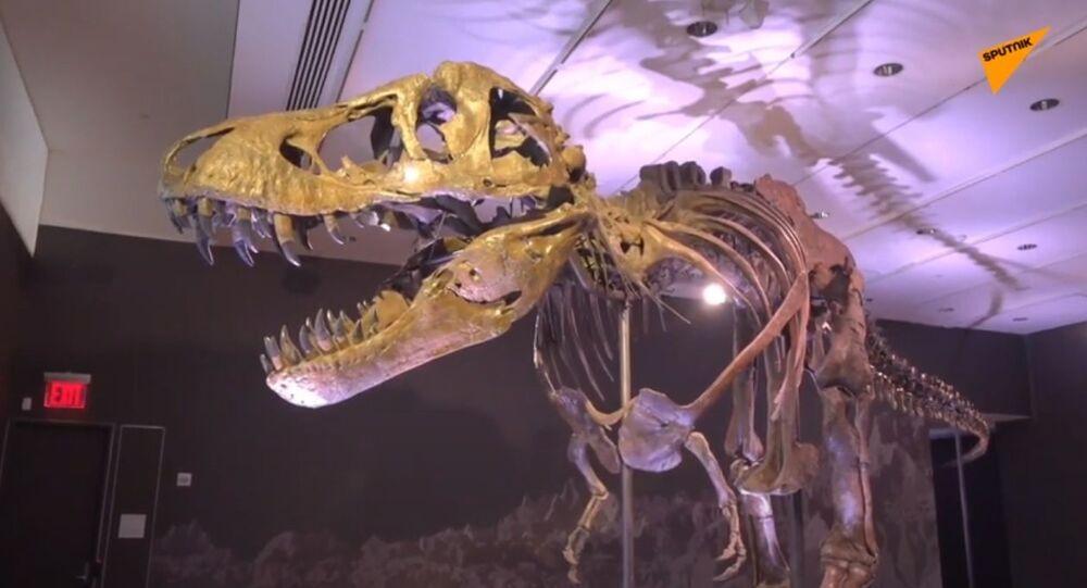 Christie's, all'asta lo scheletro di un T-Rex