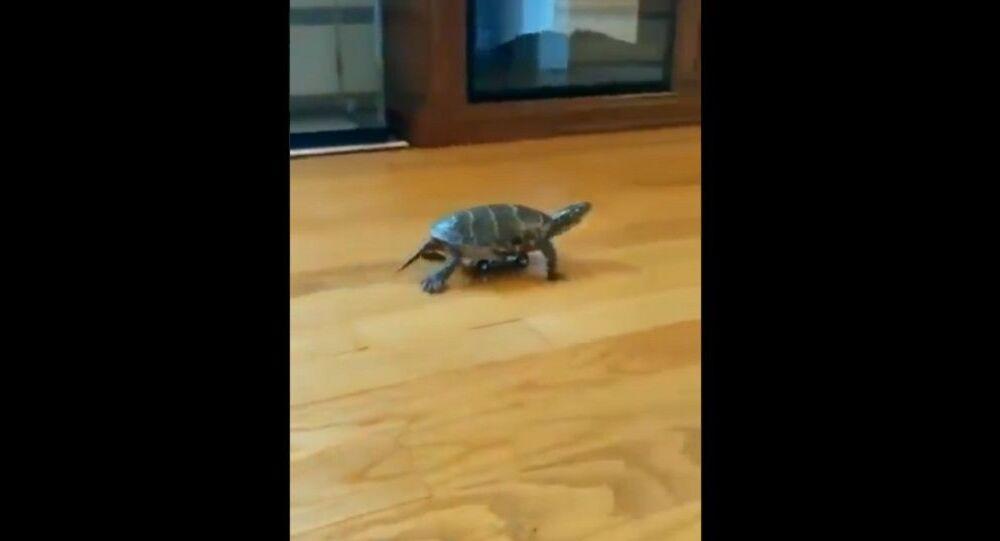 Tartaruga super veloce