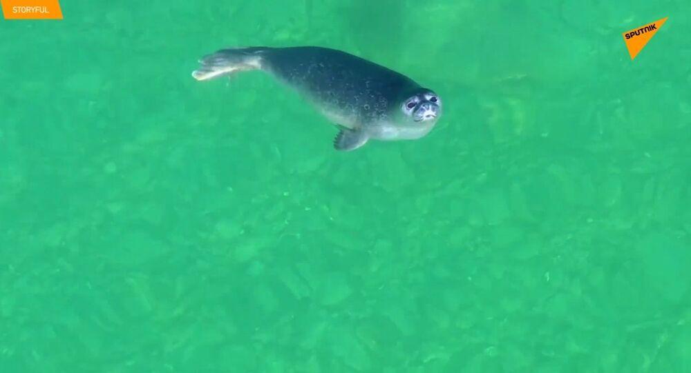 Quando una foca curiosa incontra un drone