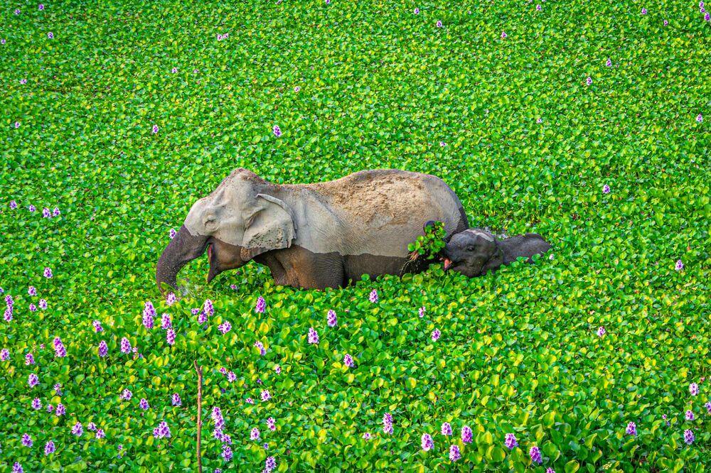 La foto Aspetta mamma, guarda cosa ho per te! del fotografo Kunal Gupta, The Comedy Wildlife Photography Awards 2020