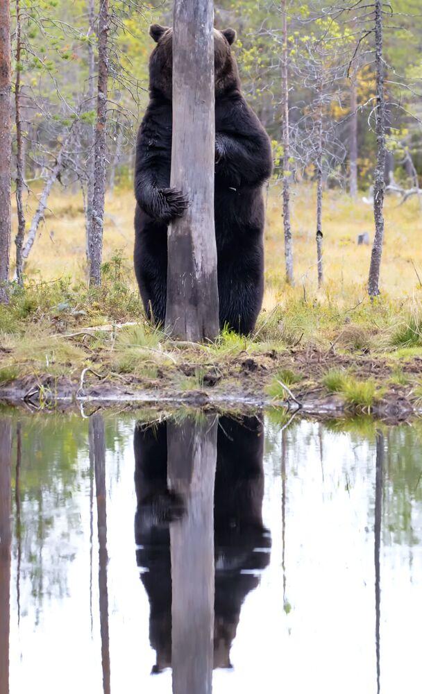 La foto Doggo del fotografo Esa Ringbom, The Comedy Wildlife Photography Awards 2020