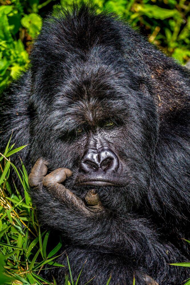 La foto Noia del fotografo Marcus Westberg, The Comedy Wildlife Photography Awards 2020
