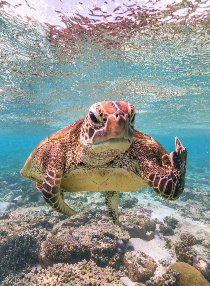 La foto La tartaruga Terry mostra il dito medio del fotografo Mark Fitzpatrick, The Comedy Wildlife Photography Awards 2020