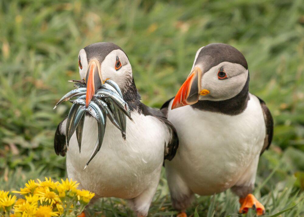 La foto Seriamente, non vuoi condividere un po'? del fotografo Krisztina Scheeff, The Comedy Wildlife Photography Awards 2020