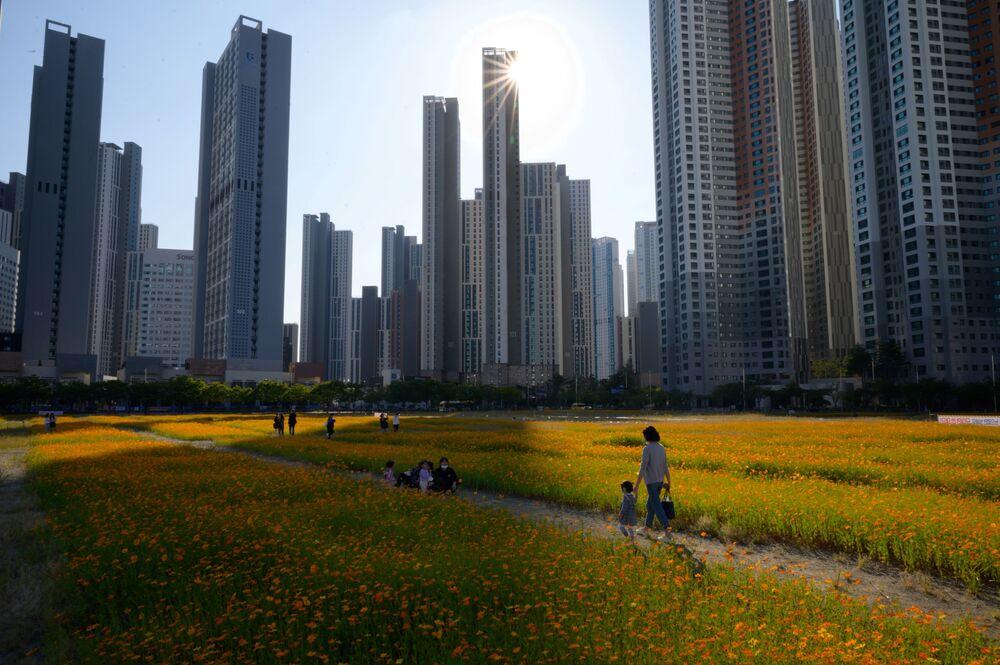 La gente passa per il campo di cosmo fiorito a Seoul