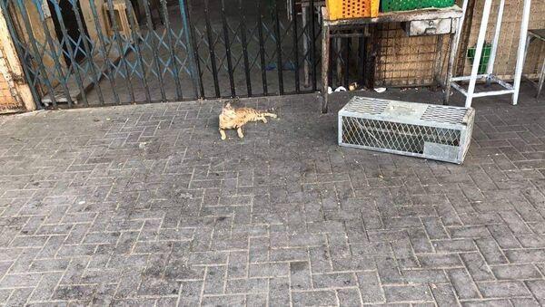A Dubai i cani e i gatti lasciati morire di fame senza cibo e acqua - Sputnik Italia