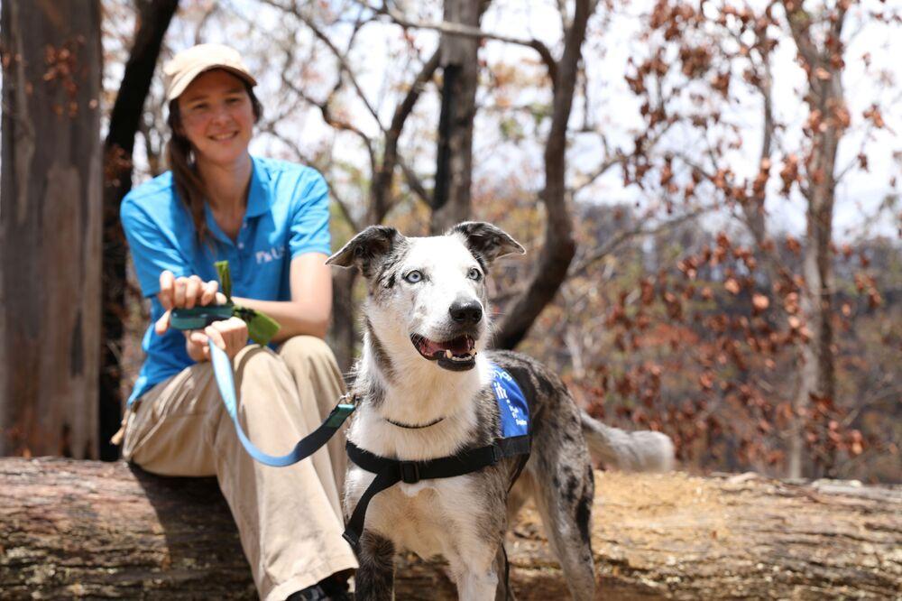 Un cane con l'addestratore