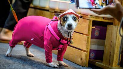 Un cane vestito in pigiama durante la fiera Pet Expo Thailand 2020 a Bangkok