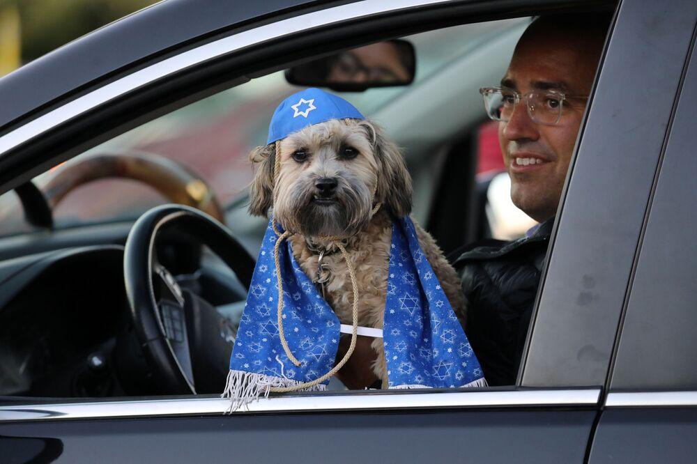 Bichon Rocky Kel Lion, un cucciolo di 7 mesi del cane havanese durante le celebrazioni del Capodanno ebraico a Toronto