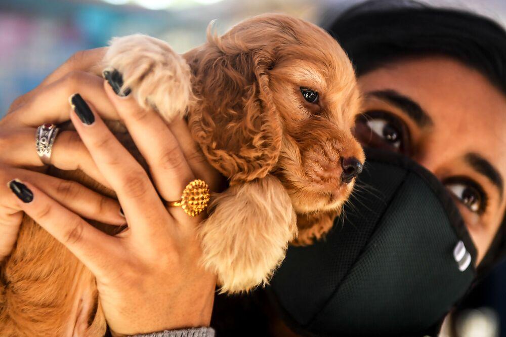 Un cucciolo comprato in un mercato di animali domestici a Calcutta